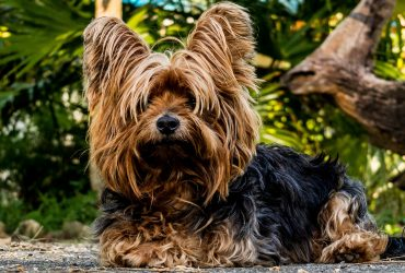 10 Longest Living Dog Breeds