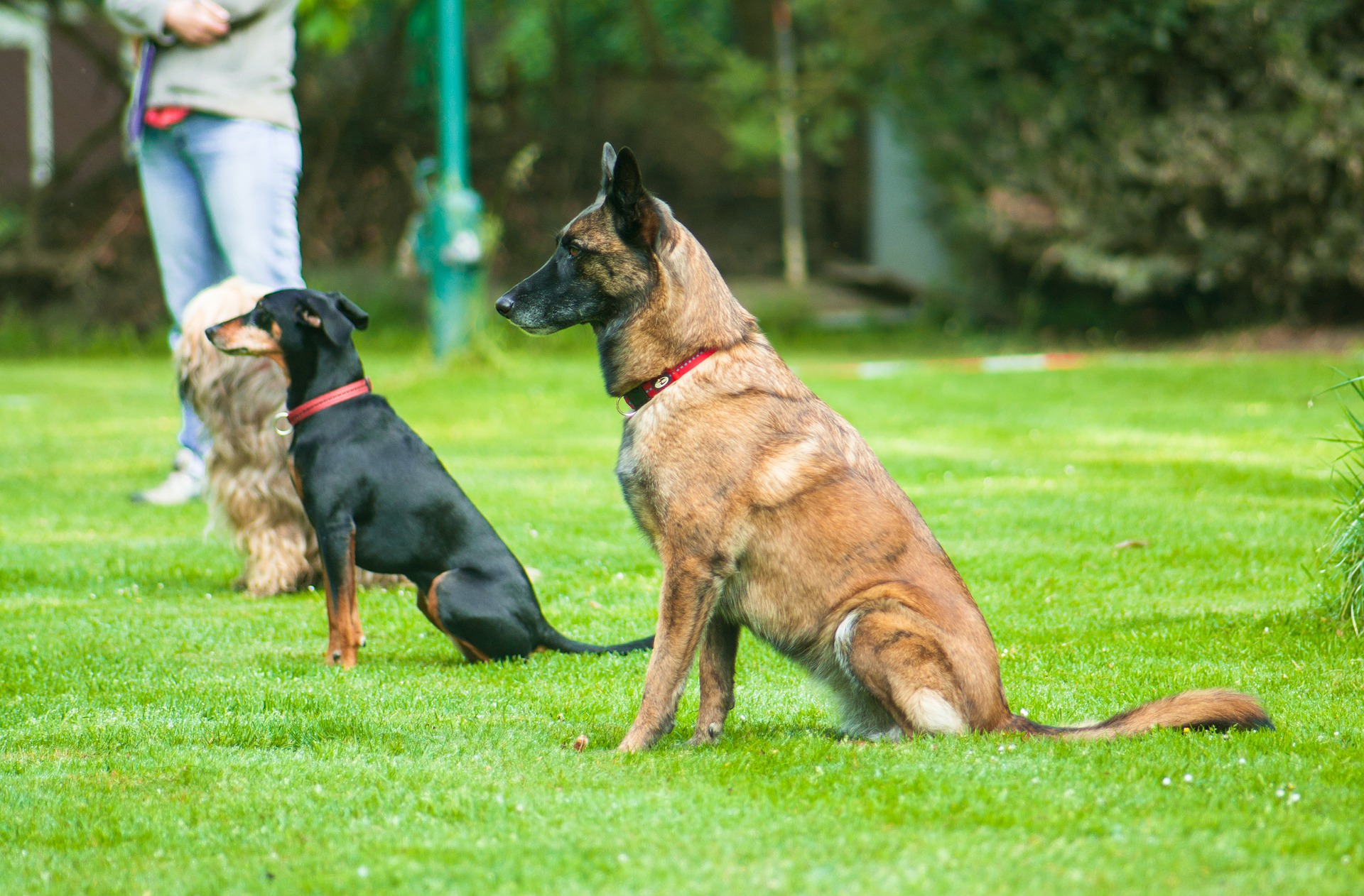 15 Obedience Training For Any Dog